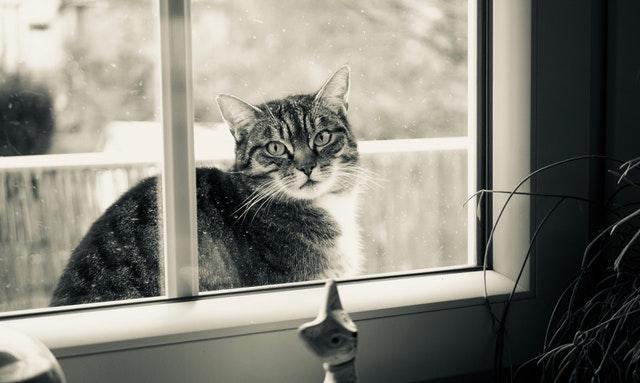 Mačka s pásikmi sedí pred oknom s plastovými rámami.jpg