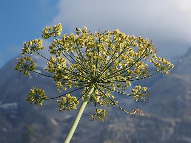 užitočná rastlina.jpg